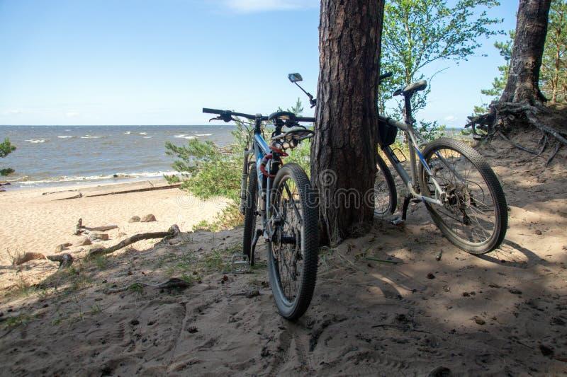 站立在一个沙滩的松树下的结合自行车 免版税库存照片
