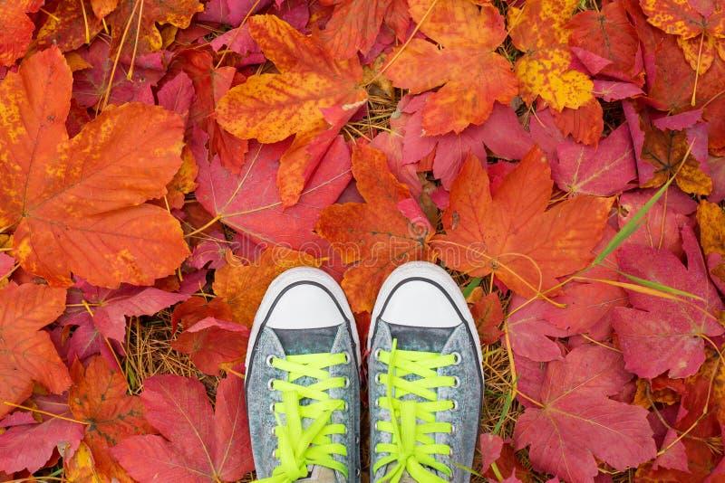 站立在下落的秋叶的人 免版税图库摄影