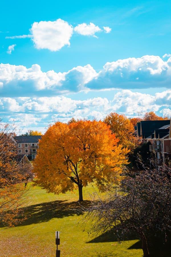 站立在公寓住宅区中间的孤立橙树 免版税库存照片