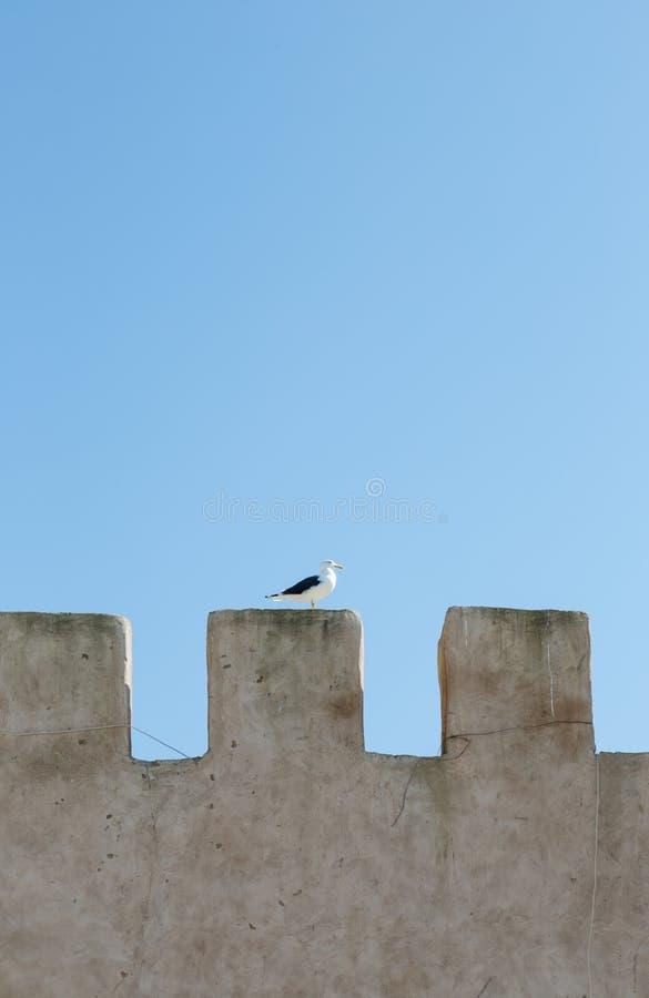 站立在冠形状的老墙壁上的唯一海鸥在天光 免版税库存图片