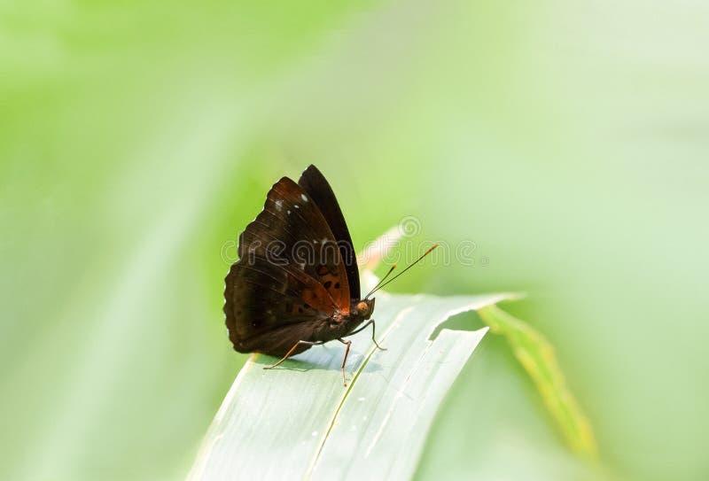 站立在叶子的一只五颜六色的蝴蝶 免版税库存图片