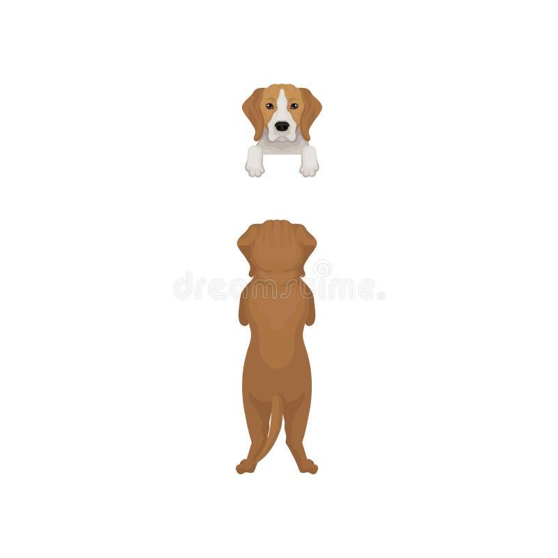 站立在后面枪口爪子和画象的小猎犬狗的平的传染媒介例证偷看从边界 前面和 向量例证