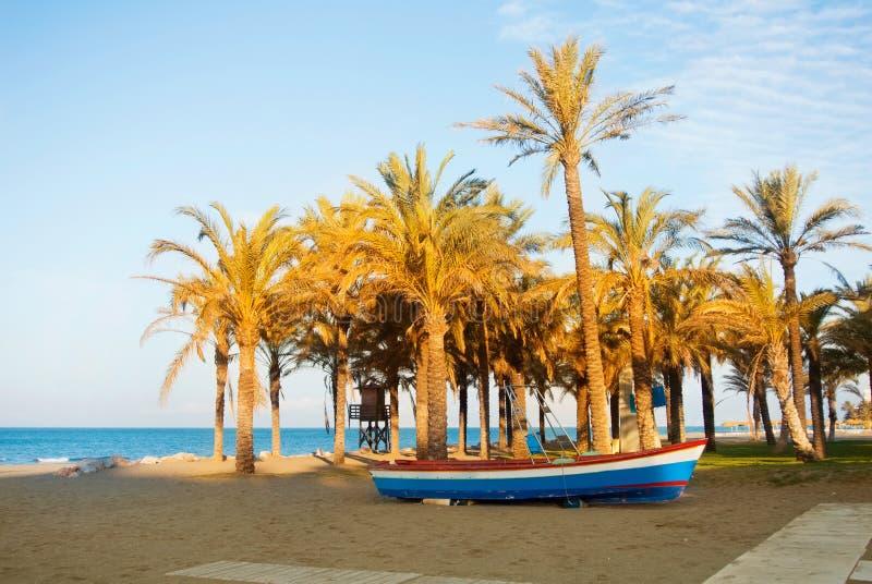 站立在含沙海湾海滩的木五颜六色的小船在与蓝色海水的高棕榈树附近在温暖的evenin的背景 免版税图库摄影
