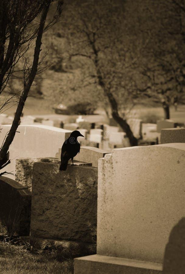 站立在坟墓的乌鸦 免版税库存照片