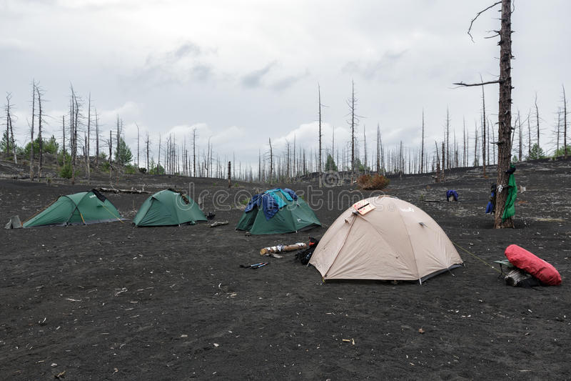 站立在堪察加半岛的死的木头的旅游帐篷 库存照片