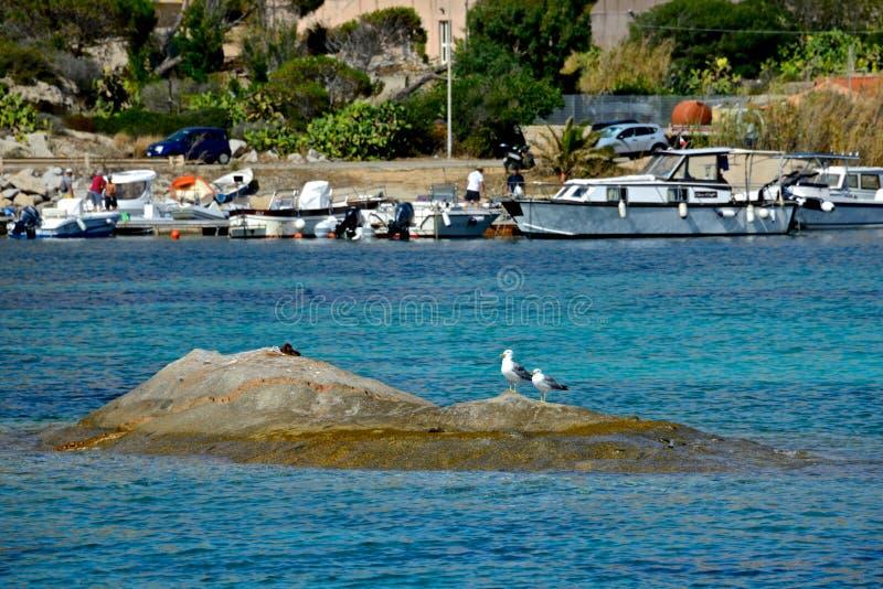 站立在岩石的两只海鸥在海和被停泊的小船中间 库存照片