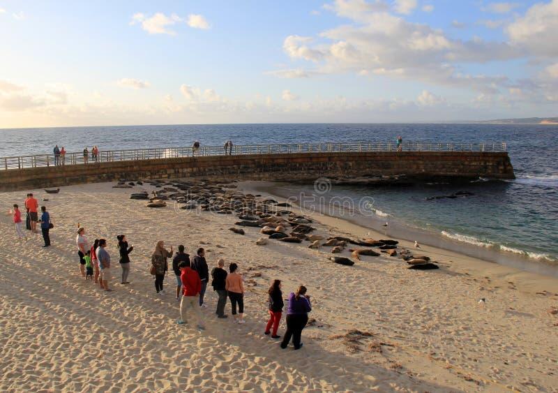 站立在岸、观看的海狮和封印附近的人们在海滩,圣地亚哥,加利福尼亚, 2016年 库存照片