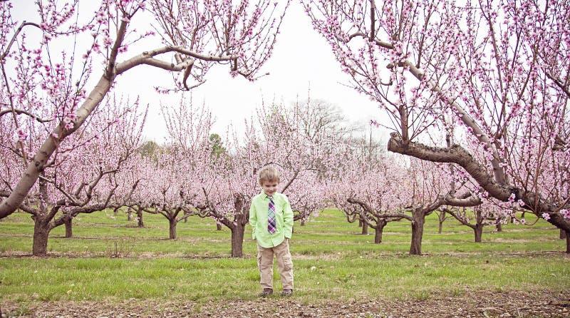 站立在开花的桃子果树园的愉快的男孩 图库摄影