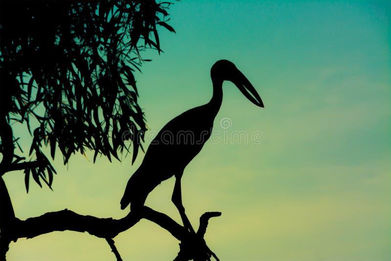 站立在日落场面的剪影苍鹭 库存照片