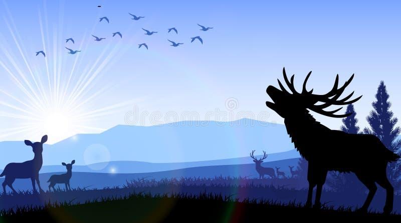 站立在早晨的时期的鹿和袋鼠剪影  向量例证
