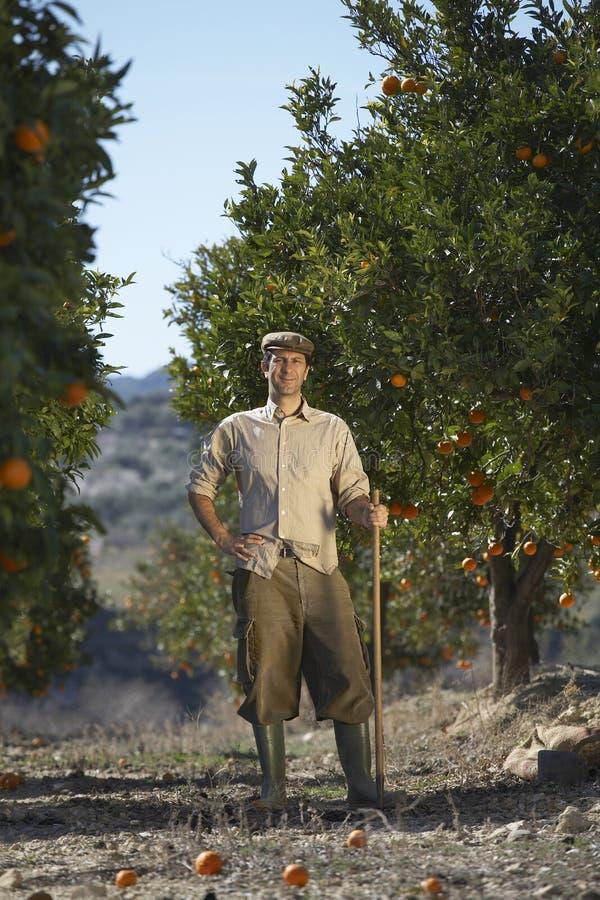 站立在橙色领域的农夫 库存照片