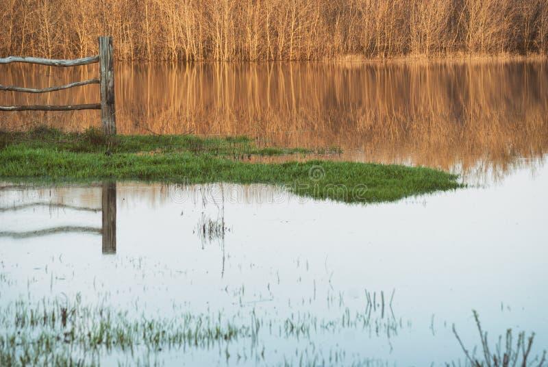 站立在水在被充斥的草甸,森林的反射中的篱芭的片段在河 免版税库存照片