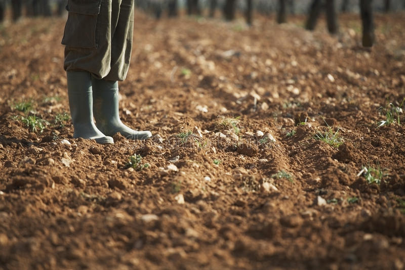 站立在沃土的农夫在农场 免版税库存照片