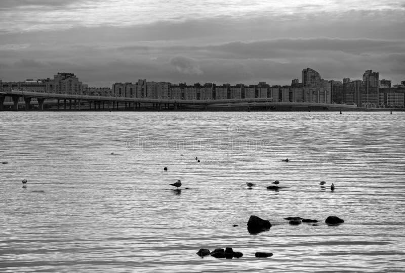 站立在海滨的岩石的海鸥反对backg 图库摄影