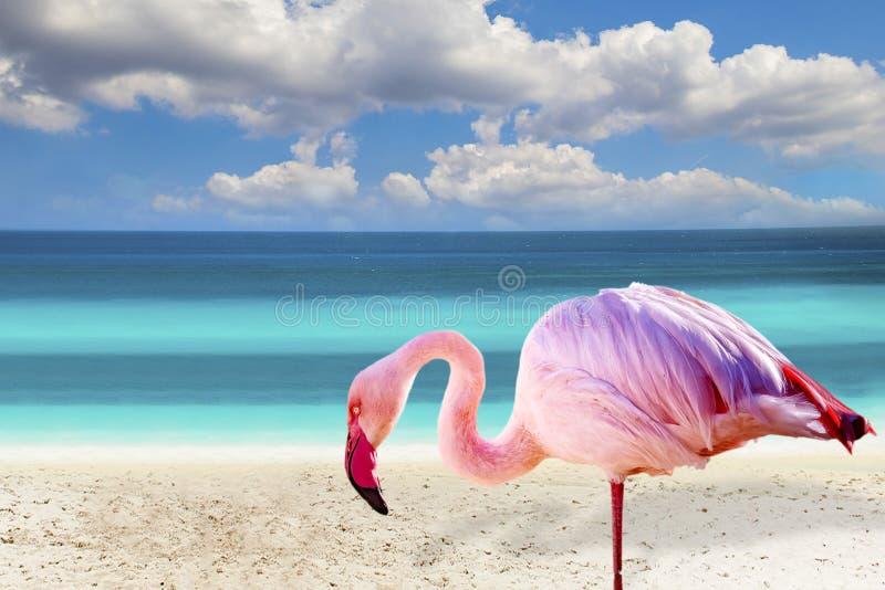 站立在海滩的火鸟接近的照片 有清楚的海和天空蔚蓝在背景中 它在墨西哥位于, 库存照片