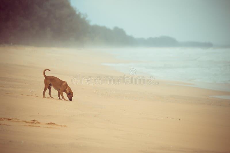 站立在海滩的狗 免版税库存图片