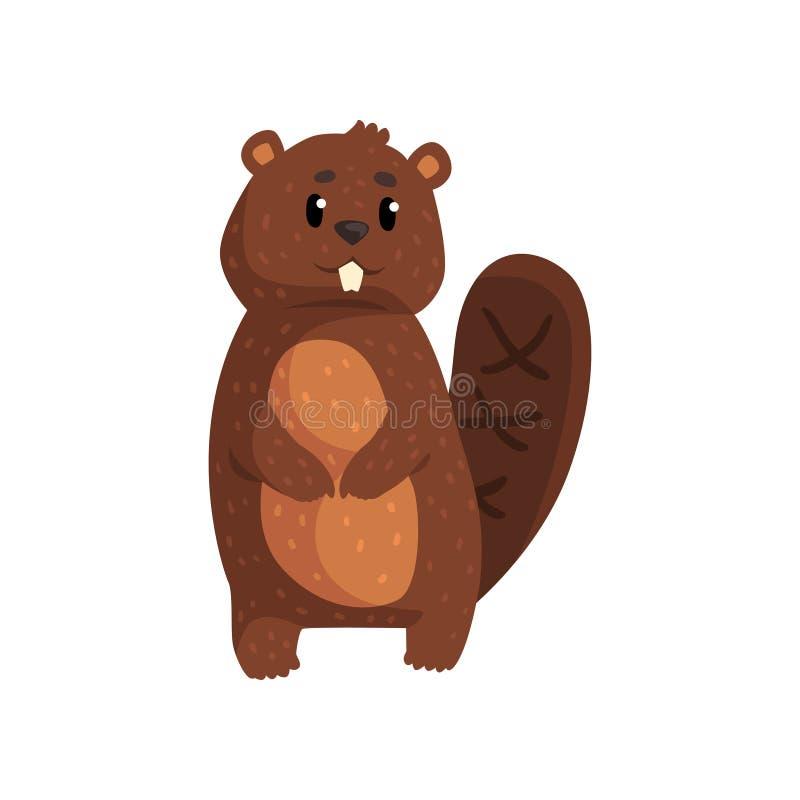 站立在白色的逗人喜爱的棕色海狸 动画片与大牙的森林啮齿目动物,形状的尾巴,小耳朵和发光 库存例证