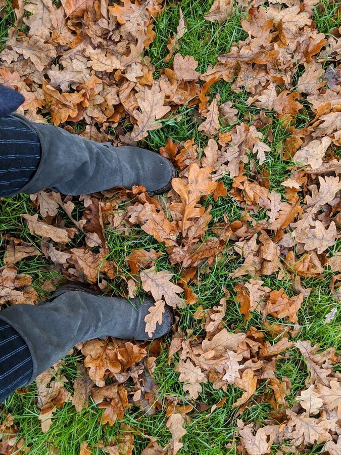 站立在秋叶中的黑起动 库存图片