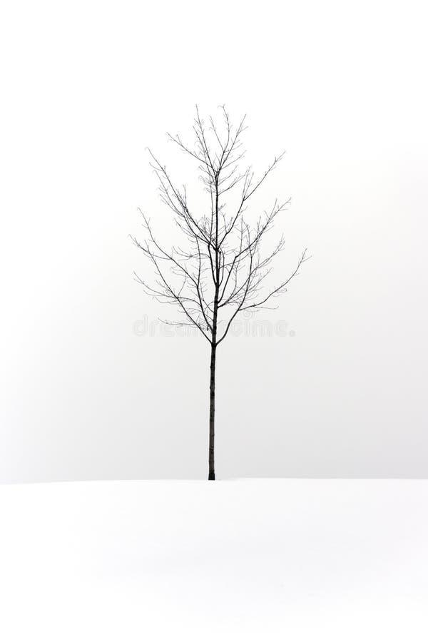 站立在积雪的小山的孤立光秃的树反对白色s 库存图片