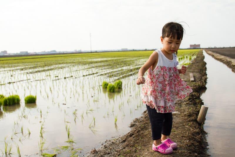 站立在米领域的亚裔矮小的中国女孩 免版税库存照片