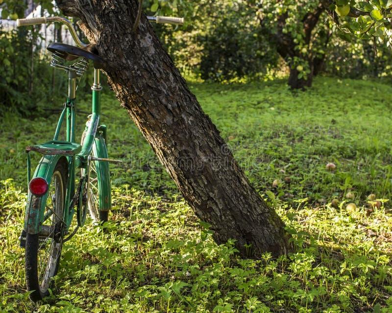 站立在苹果树下的老自行车在庭院里 库存图片