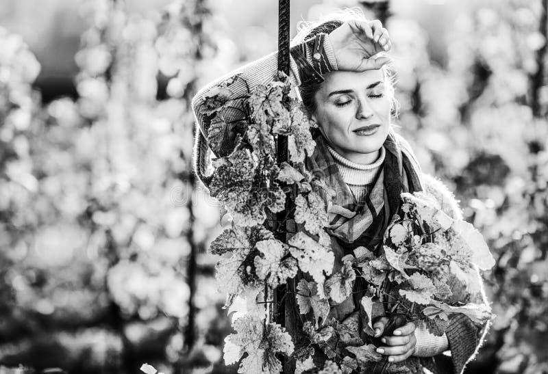 站立在葡萄园里的妇女种葡萄并酿酒的人户外在秋天 库存图片