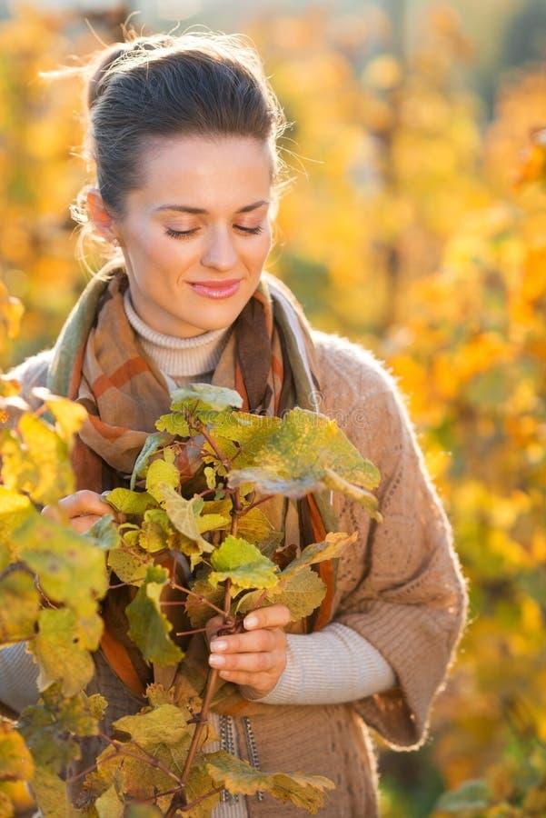 站立在葡萄树中的轻松的妇女种葡萄并酿酒的人在葡萄园里 免版税库存照片