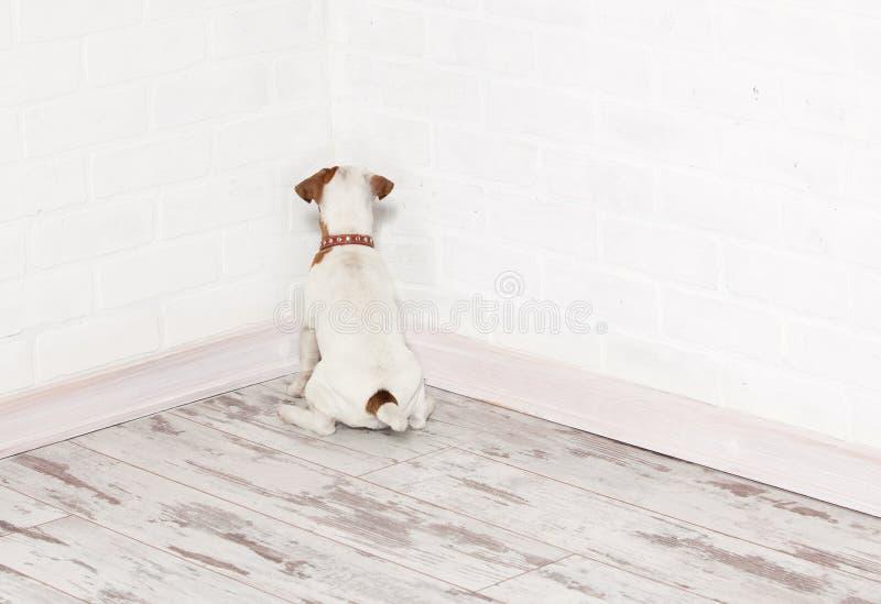 站立在角落的狗 图库摄影
