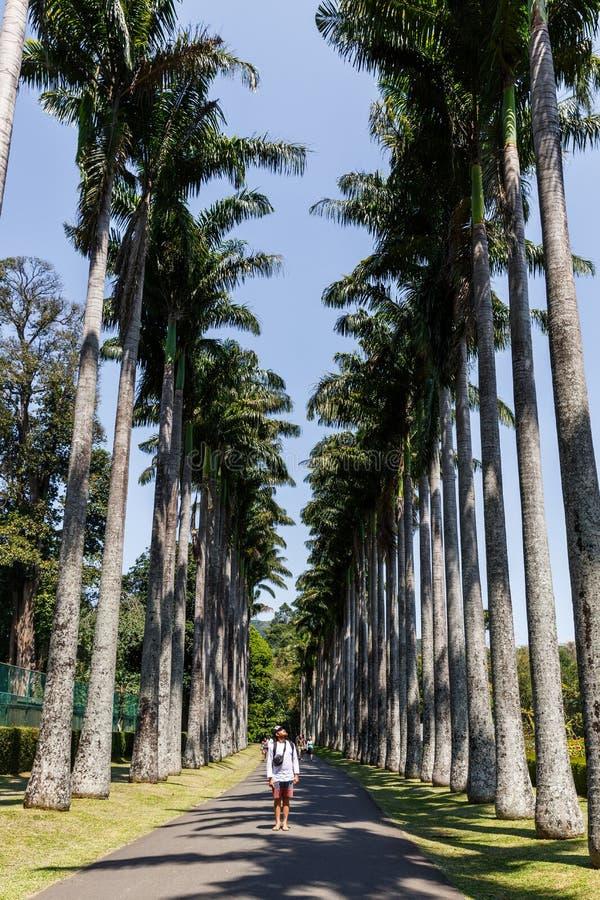 站立在道路和看棕榈树,斯里兰卡,康提的游人 免版税库存图片