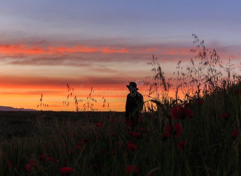 站立在鸦片领域的一个人的剪影在黎明 免版税库存照片