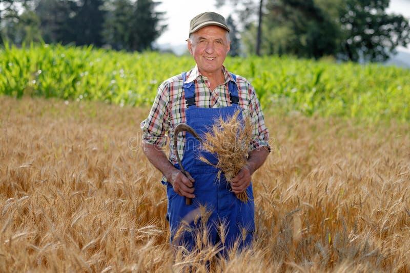 站立在麦田的有机农夫 免版税库存照片