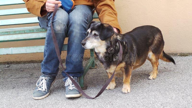 站立在他/她的所有者旁边的小狗 免版税图库摄影