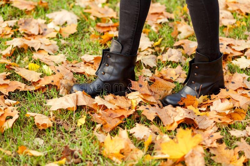 站立在绿草和秋天槭树叶子的女性腿 库存照片