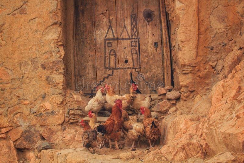 站立外面在门前面的一个小组鸡 图库摄影