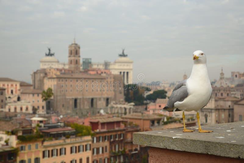站立有罗马,意大利背景的海鸥  库存照片