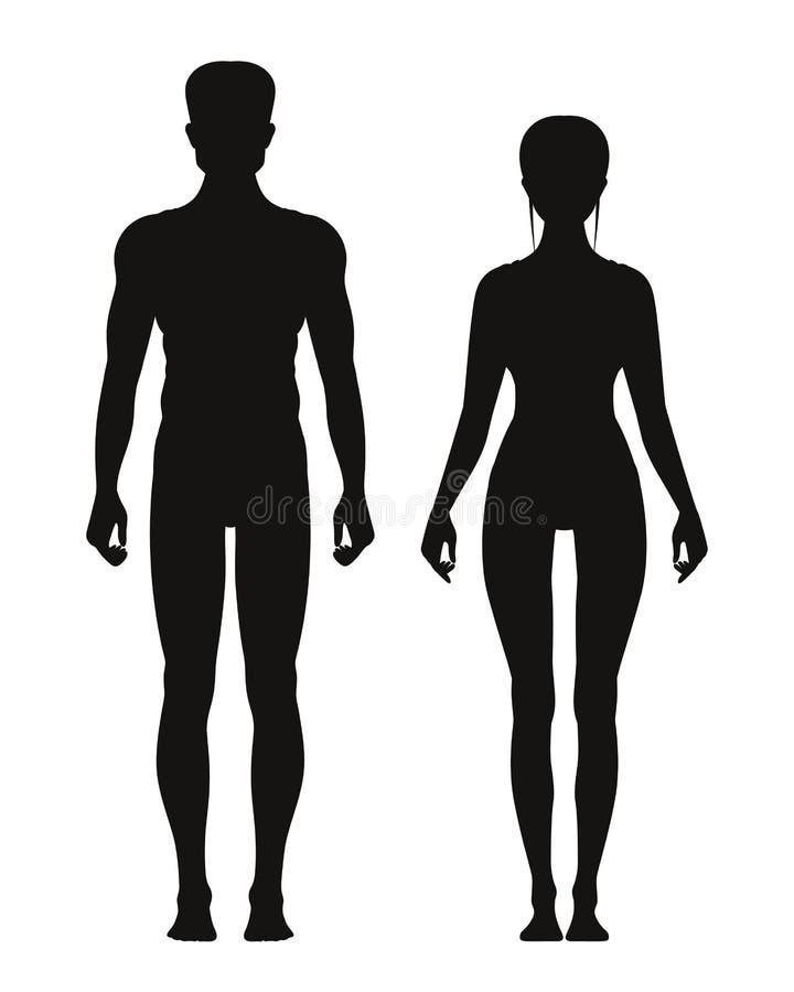 站立正面图的运动的男性和女性剪影  传染媒介解剖学模型 库存例证