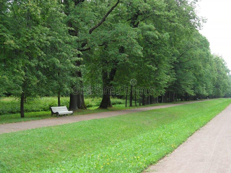 站立沿有草坪的小径的空的白色长凳在城市公园在夏日 库存图片