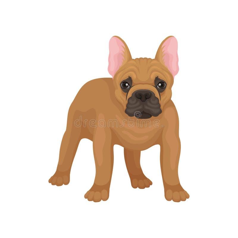 站立法国牛头犬画象,正面图 与光滑的棕色外套、大桃红色耳朵和逗人喜爱的枪口的狗 平的传染媒介 库存例证