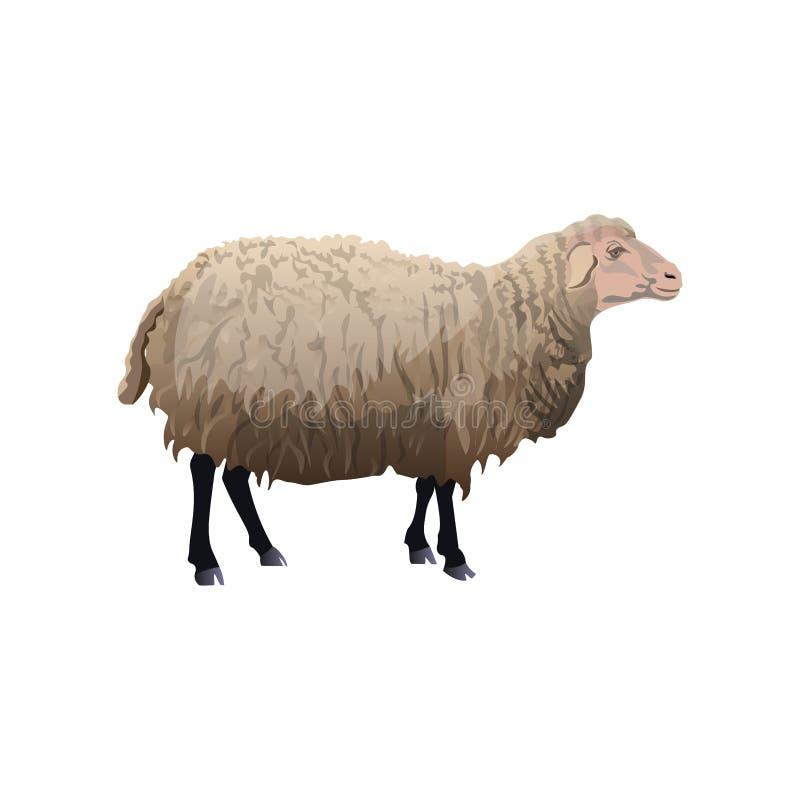 站立的农厂绵羊 库存例证
