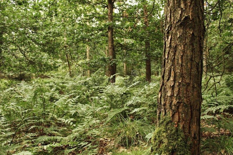 站立的树高 免版税库存图片