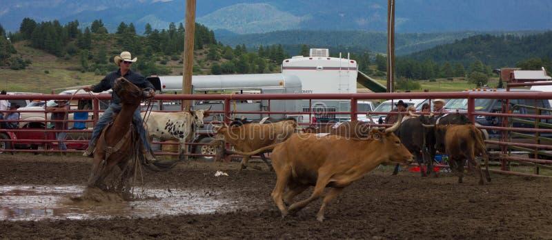 竞争在圈地的蓄牧者在科罗拉多 免版税库存图片