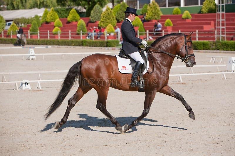 竞争在驯马竞争经典之作的车手 免版税图库摄影