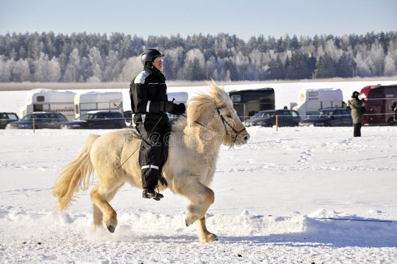 竞争马冰岛语 库存照片
