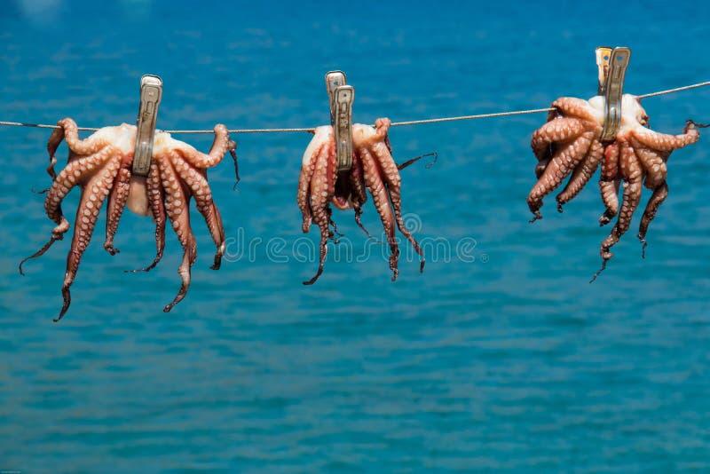 章鱼干燥在阳光下 免版税图库摄影