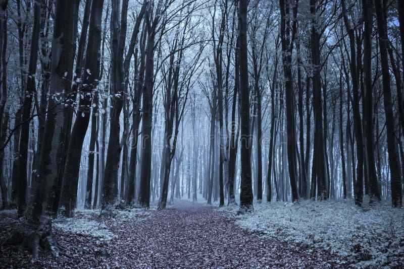 童话有雾的森林 免版税库存图片