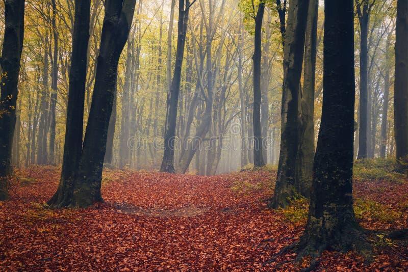 童话雾在有剪影树的森林里 库存照片