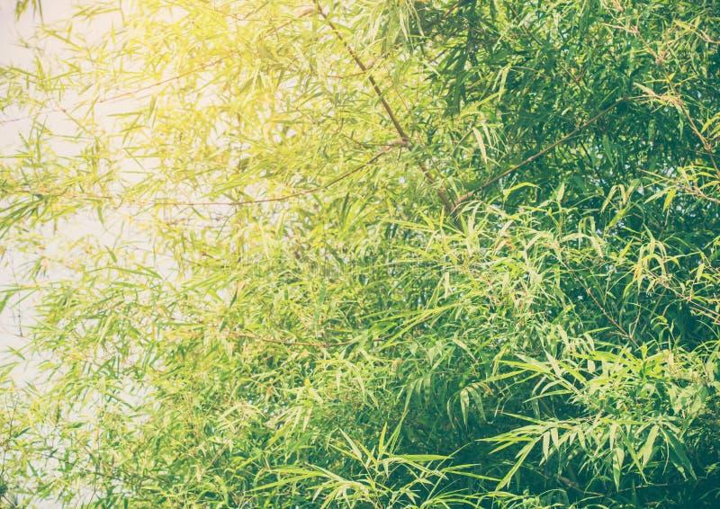 竹叶子背景 库存照片