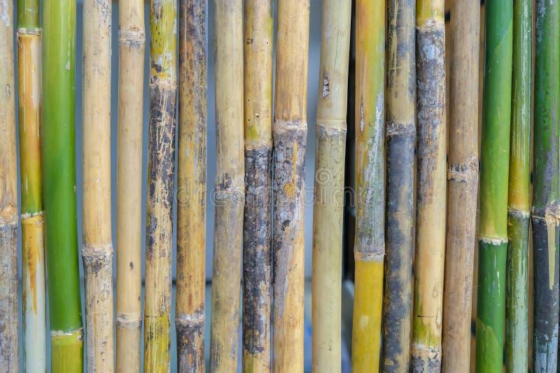 竹墙壁是新鲜和干燥的 免版税库存照片