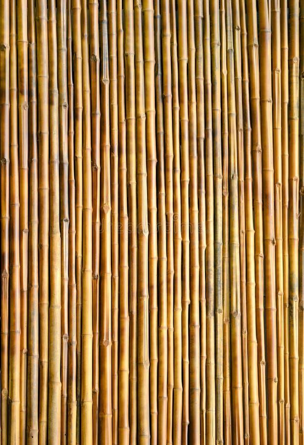 竹墙壁纹理背景 库存照片