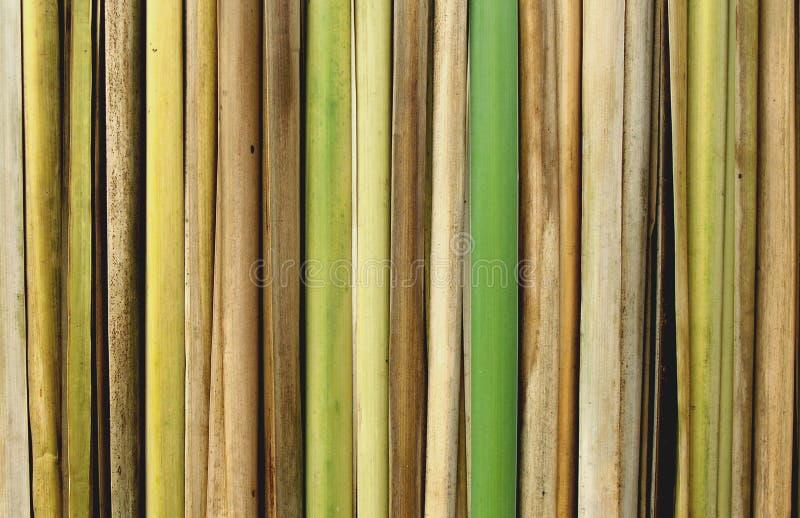 竹子接近的芦苇 免版税库存照片